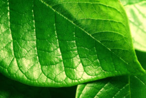 IRF grønkar